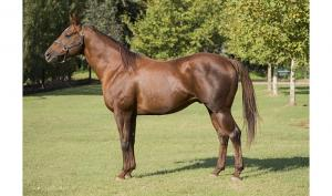 Padrillo: Macho Star (SPC)